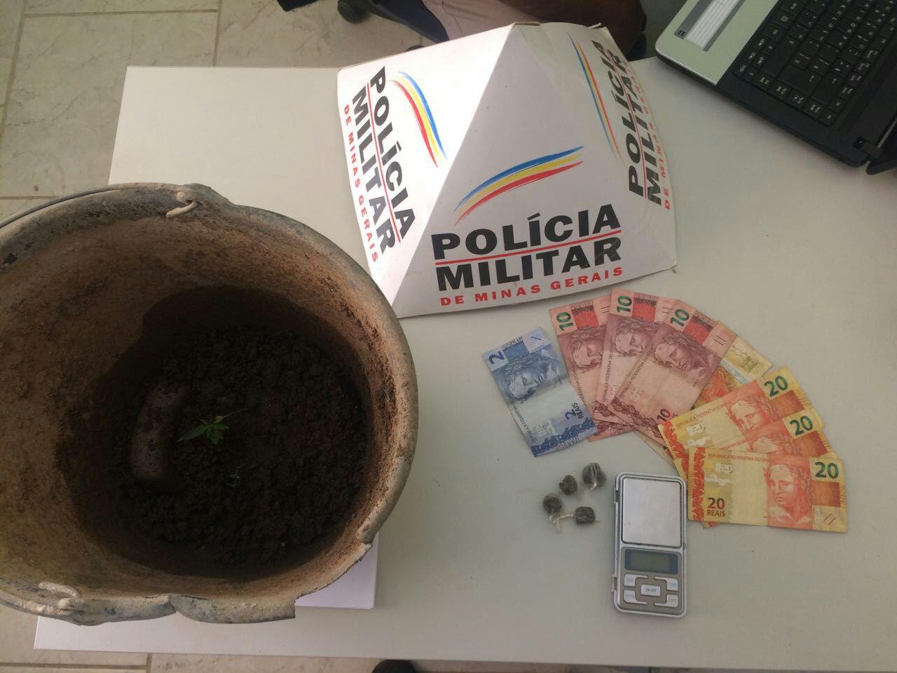 POLÍCIA PRENDE SUSPEITO DE TRÁFICO – DOIS PÉS DE MACONHA PLANTADO EM UM BALDE